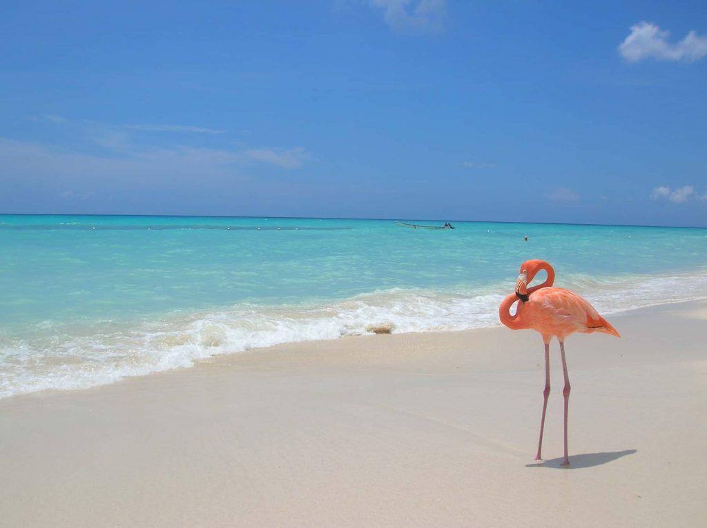 Сезон в Доминикане – когда лучше отдыхать по месяцам: таблица