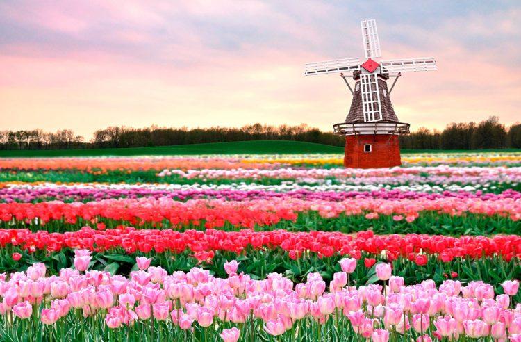 Голландия и Нидерланды — в чем разница