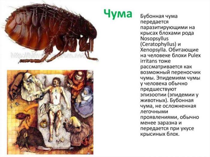 Бубонная чума в Монголии в 2020 году